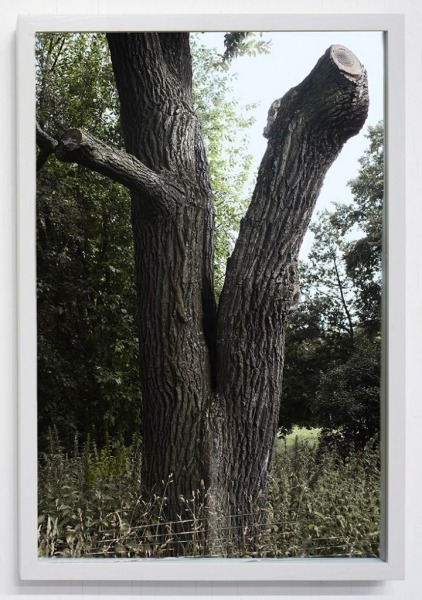 Of the Excellence of Trees # 1, 2012