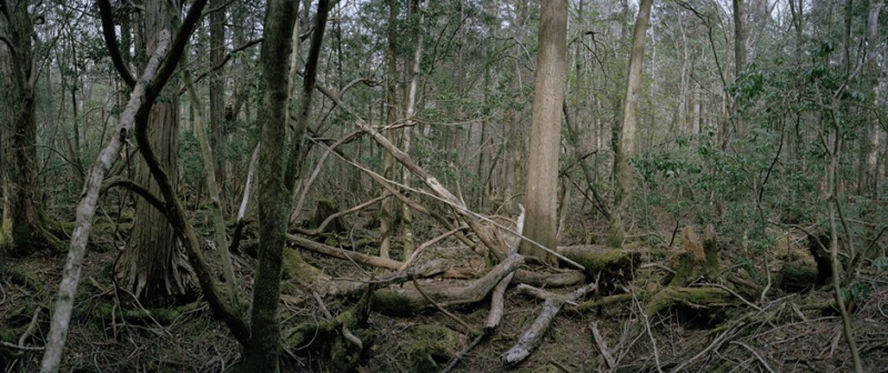 Untitled, Aokigahara #2, 2006-2007