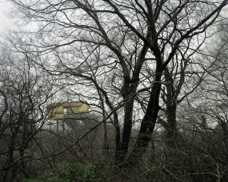 House Behind the Trees, 2010-2013