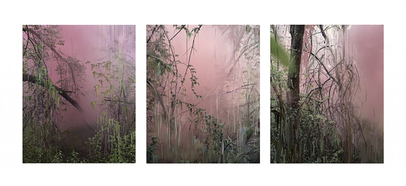 Untitled (Forest 17, 18, 14), 2019