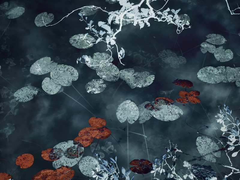 Water Lilies #14, 2020