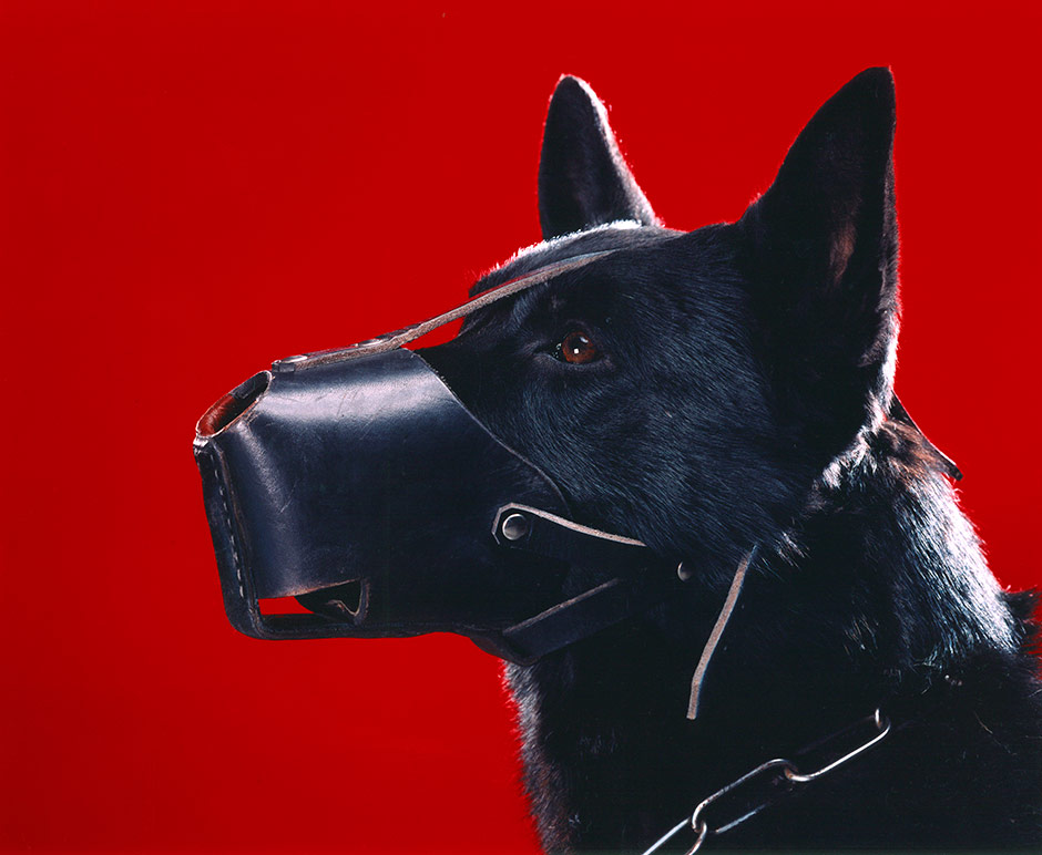 A Dog with a Muzzle on Red Background, 2004