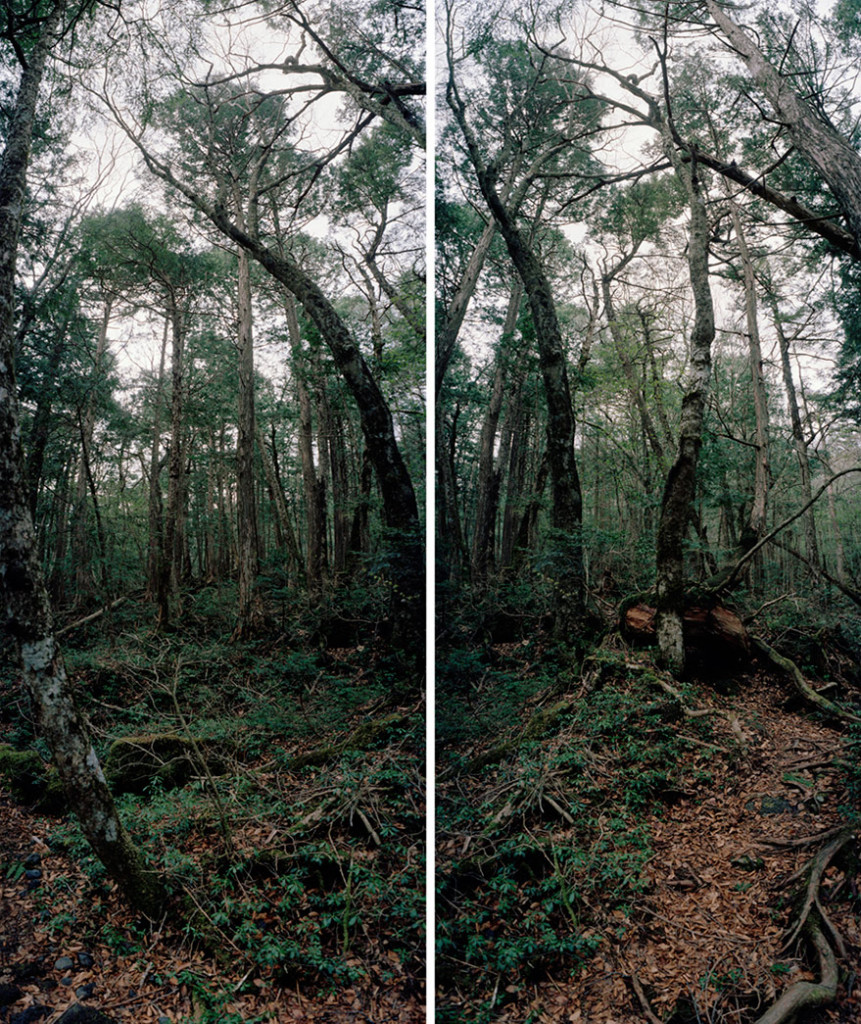 Untitled, Aokigahara #1, 2006-2007