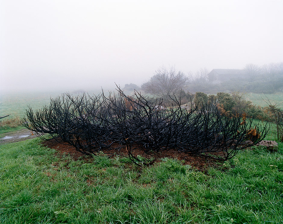 Burned Bush, 2002