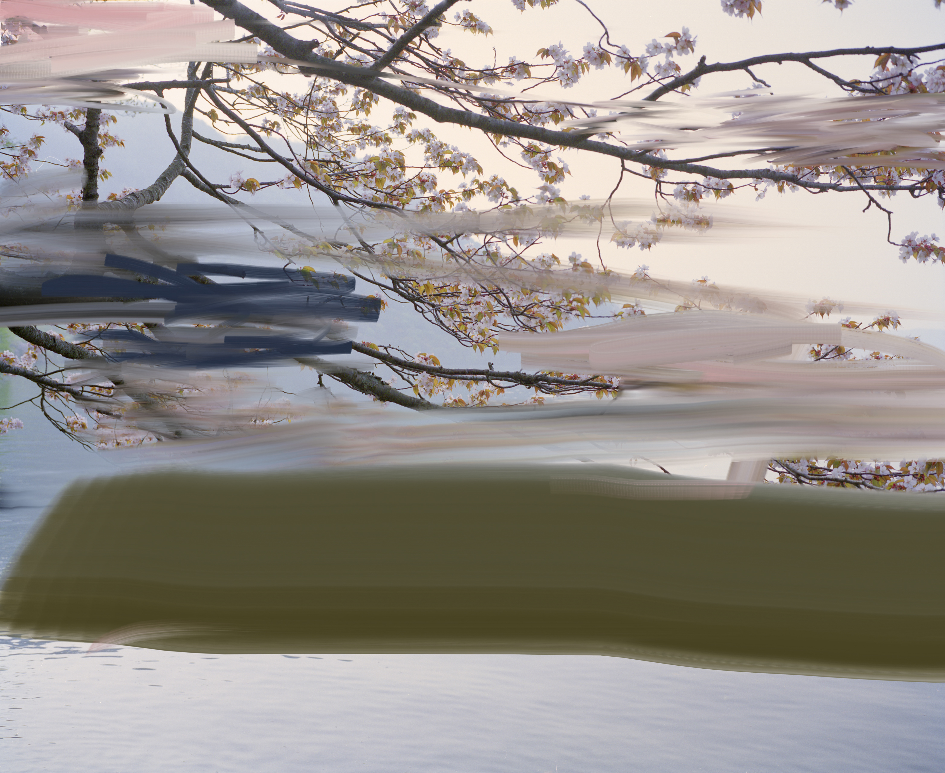 Untitled (Sakura 1), 2011
