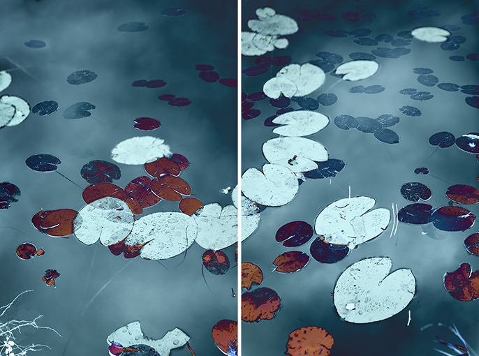 Water Lilies #2, 2018